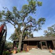 Tree Care_Cranes_Crane Pads_DICA_Precision Crane